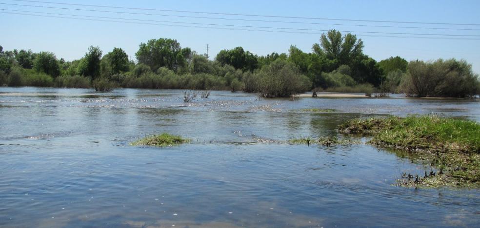 El río Tiétar anega tierras de regadío y causa importantes daños a su paso por Jaraíz