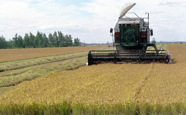 Valor añadido y etiquetado, los grandes retos del sector del arroz