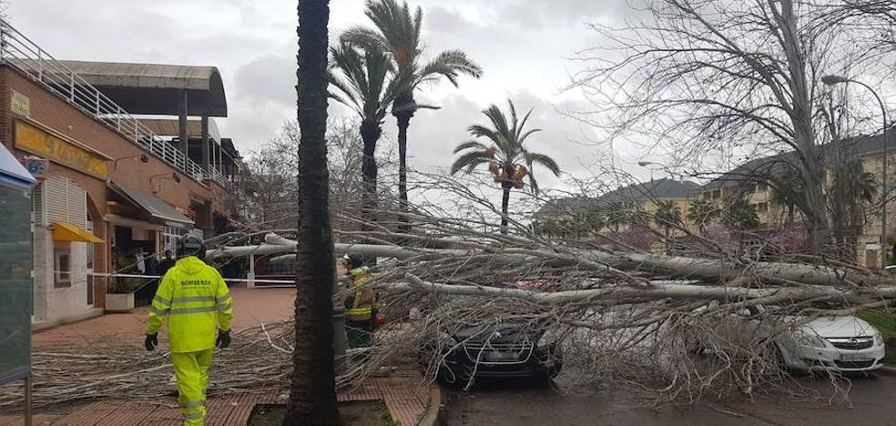 El viento tumba varios árboles en Badajoz provocando daños en coches y locales