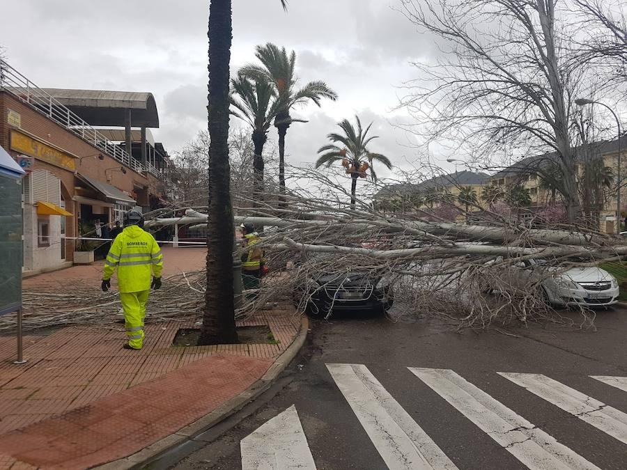 Efectos del fuerte viento en Badajoz