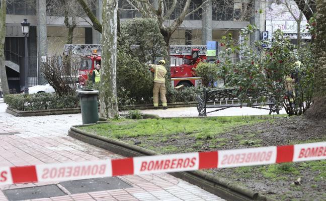 Los bomberos intervienen en Cánovas ante el peligro de caída de un árbol