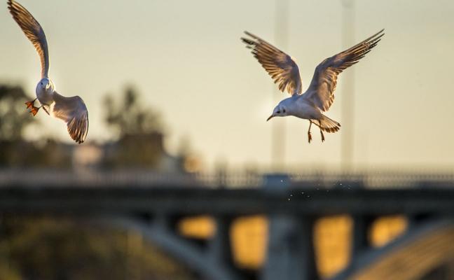 Badajoz contará con el Museo de las Aves en 2021