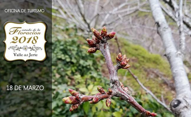 Rutas gratuitas en bus para disfrutar del Cerezo en Flor