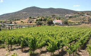Extremadura contará con una red de asesoramiento para impulsar los productos ecológicos