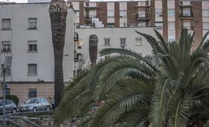Badajoz solicita a la Junta 100.000 euros para luchar contra el picudo rojo