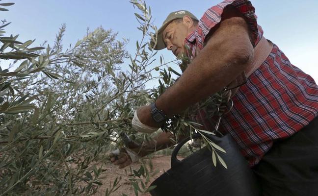Extremadura recibirá este año 40,8 millones del Gobierno para los trabajadores del campo