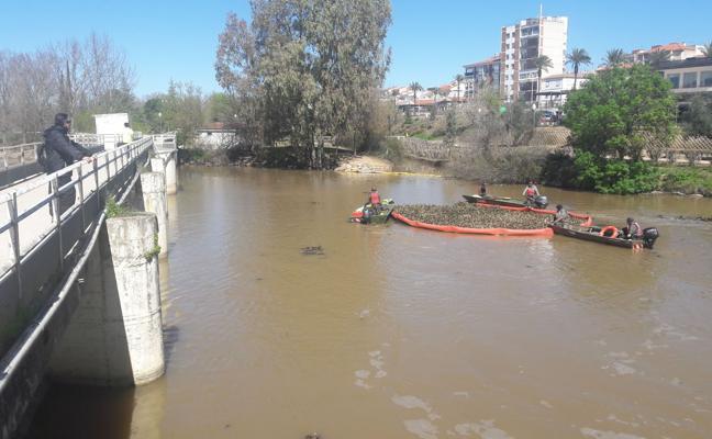 Licitados 4,1 millones para retirar camalote desde el Zújar a puente Ajuda