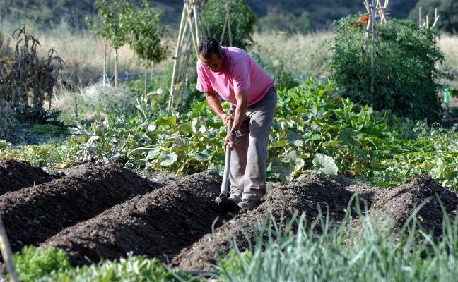 Extremadura disponía en 2016 de 5.058 hectáreas de huertos familiares y 209 de invernaderos