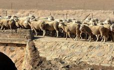 Hacienda aprueba una rebaja fiscal de 43 millones para el campo por la sequía