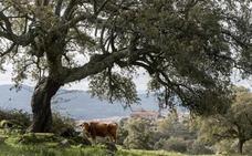 Una empresa pagará casi un millón de euros por el corcho de Valcorchero