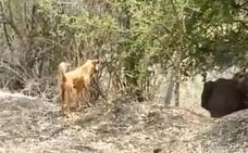 Un perro espanta a un elefante
