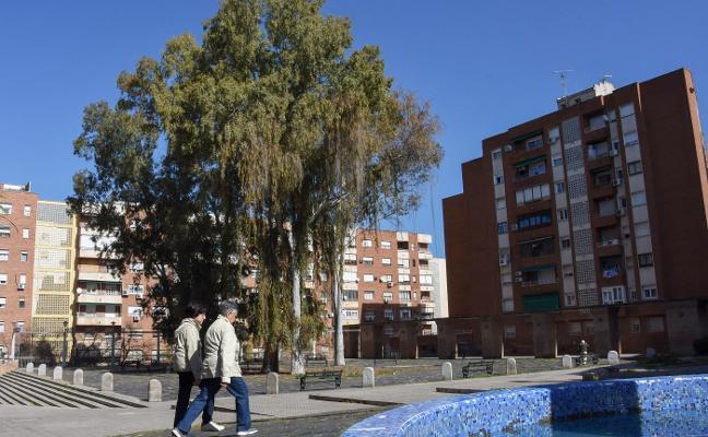Los vecinos aseguran que los eucaliptos de la plaza de Santa Marta de Badajoz son un peligro