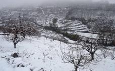 La nieve no afecta de momento a los cerezos del Jerte aunque retrasa su salida al mercado