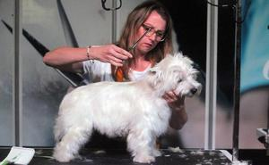 Una guía para enseñar a tener una mascota en casa