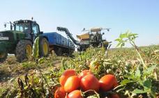 Las continuas lluvias y el frío mermarán la producción de fruta y retrasarán el tomate