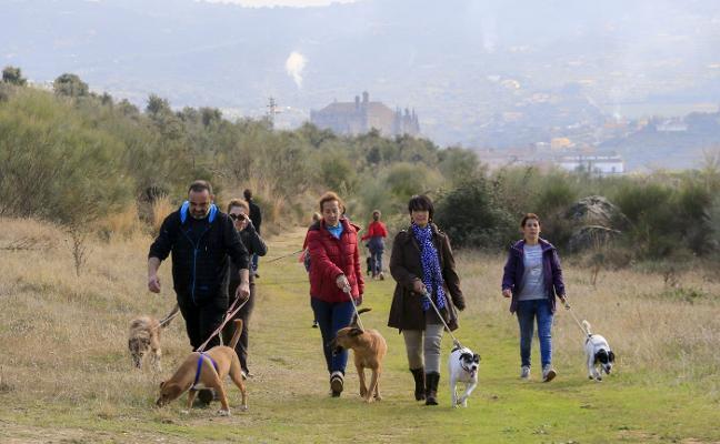 La Protectora atiende a más de 100 perros con ayuda de las casas de acogida