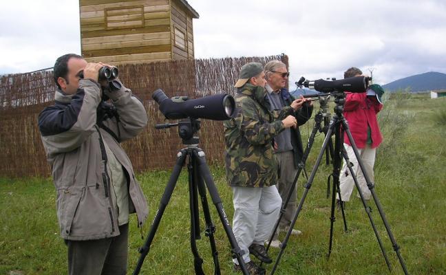 Jornada de avistamiento de aves singulares en Almaraz