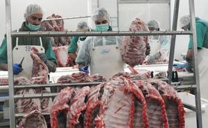 El 60% de los cerdos ibéricos criados en la región se sacrifica fuera