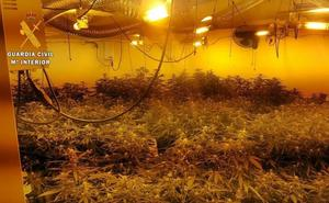 Intervienen 700 plantas de marihuana en dos viviendas de Guareña