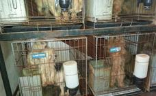 Juzgan este miércoles en Don Benito a un hombre acusado de tener un criadero ilegal de perros