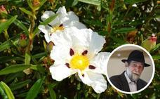 Pablo Guerrero actúa el sábado en la Fiesta de la Jara en Flor de La Siberia