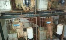 La protectora El Refugio pide 41 años para el dueño del criadero ilegal de perros de Don Benito