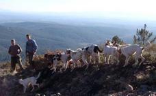 Tres razones por las que la caza es motor económico de Extremadura