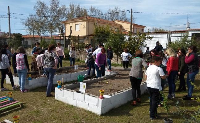 Comienzan a cultivar el huerto escolar en Rosalejo