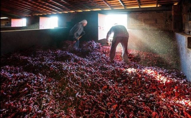 La Junta homologa el contrato de compraventa de pimiento para pimentón en Jaraíz