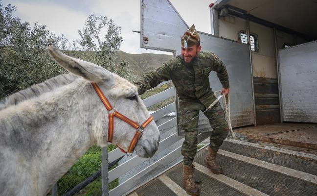 El semental 'Tomillo' se enrola en el Ejército