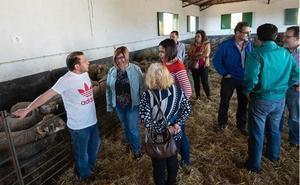 La Diputación de Cáceres reparte 172 ejemplares de la raza Merino Precoz a 26 ganaderos de la provincia