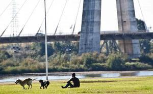 La Policía Local de Badajoz intensificará la vigilancia sobre los perros que vayan sueltos