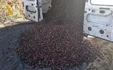 AUGC Badajoz vincula el aumento de robos de aceitunas con la escasez de plantilla