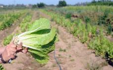 La superficie de producción ecológica aumenta un 16% en Extremadura