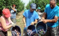 El sector hortofrutícola debe combatir la venta a resultas