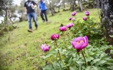 La Sierra de Alor se viste de color rosa