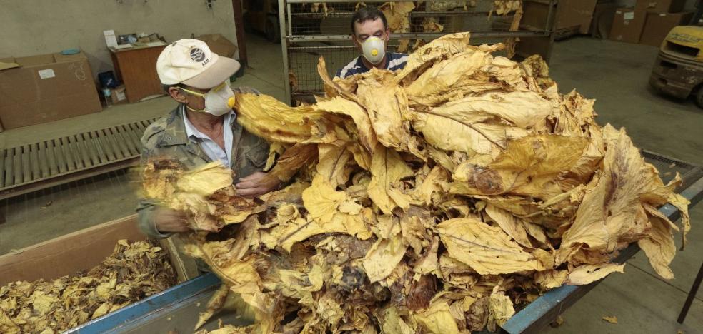 La región exigirá una guía a quien transporte hoja de tabaco para un mayor control