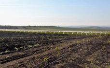 Aprobado el plan de transformación en regadío de 1.200 hectáreas en Monterrubio de la Serena