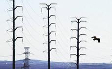 Red Eléctrica destina 500.000 euros a la conservación de la biodiversidad