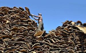 El sector del corcho espera una campaña «positiva»