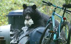 Un oso ataca a una niña de 5 años en el patio de su casa en EE UU
