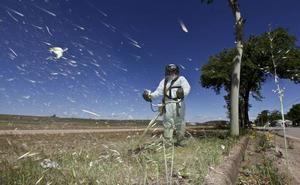 Comienza la campaña de desbroce, que llegará a 196 hectáreas antes de julio