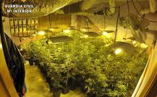 Desmantelada una plantación de marihuana en un domicilio de Montijo