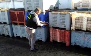 Dos hombres son detenidos por la compra ilegal de 70 toneladas de aceitunas