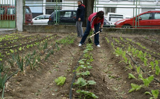 Suelos baldíos se convierten en huertas ecológicas para crear empleo