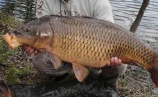 La Albuera acogerá un concurso de pesca de grandes carpas