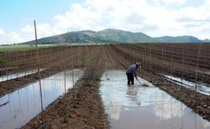 Cooperativas Extremadura estima que 20.000 hectáreas están afectadas por el pedrisco