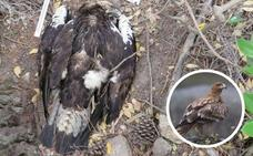 WWF y SEO/BirdLife se personan como acusación en el envenenamiento de tres águilas imperiales