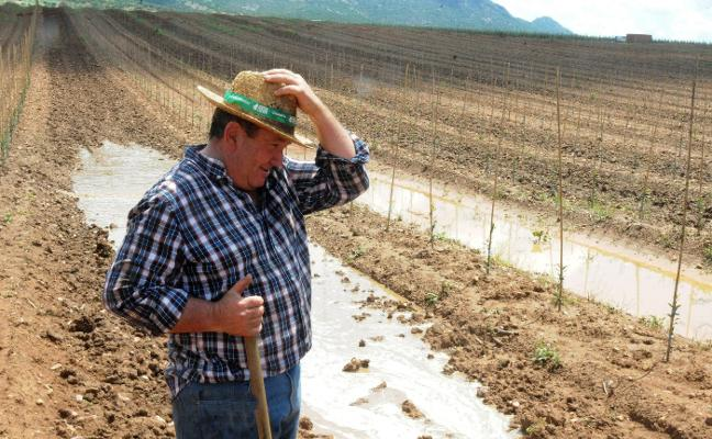 Extremadura pierde el 70% de la producción prevista de ciruela