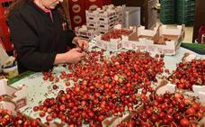 Un simposio tratará en Badajoz del 4 al 7 de junio la maduración y postcosecha hortofrutícola